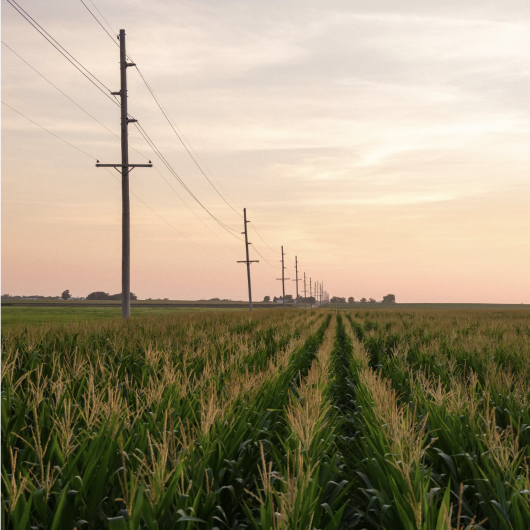 powerlines over field of green